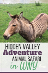 Hidden Valley Adventure:  WNY Animal Safari between Buffalo & Rochester